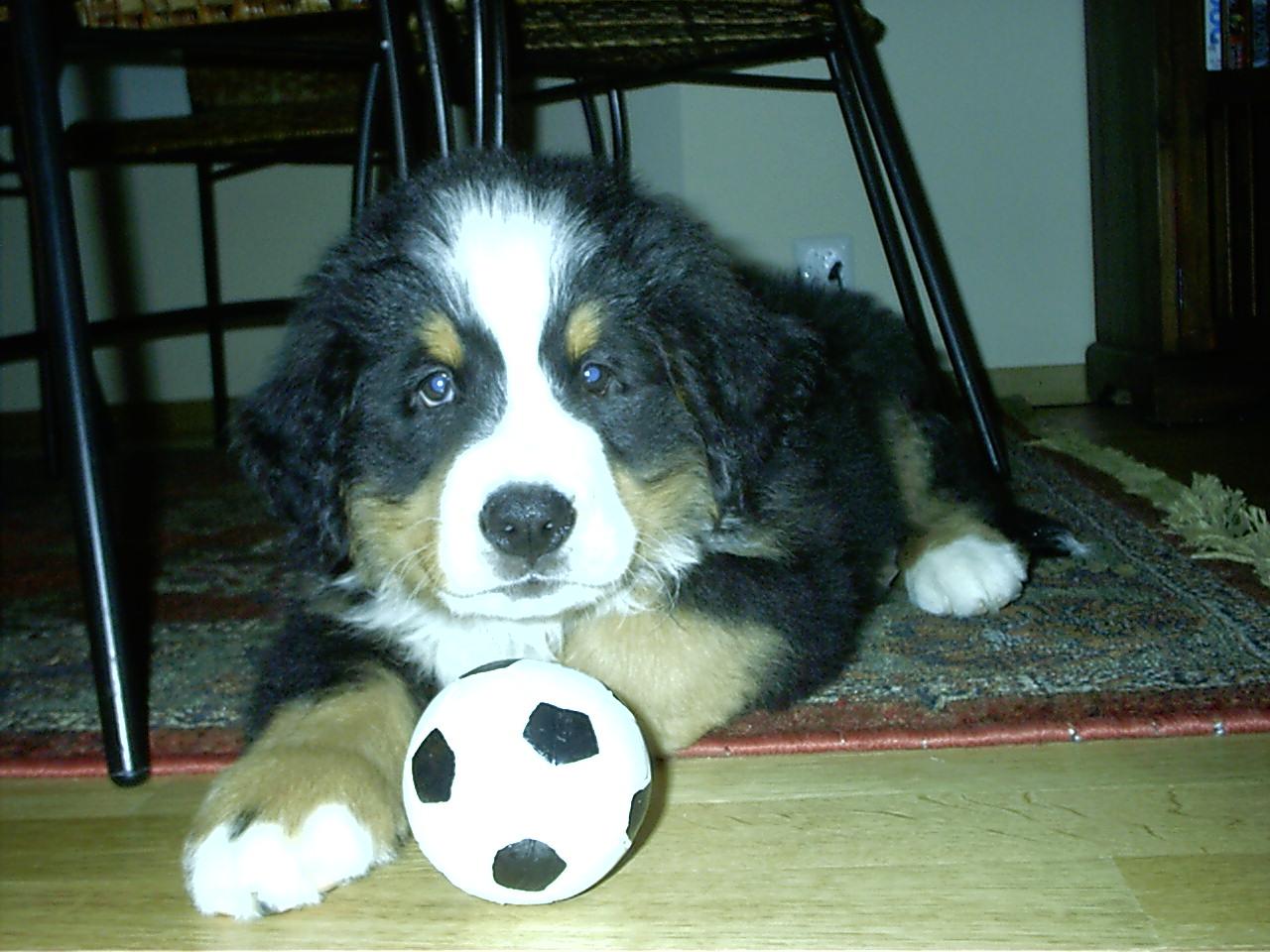 socceranyone.jpg
